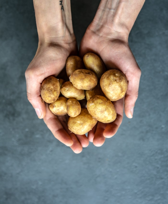hands holding italian new potatoes